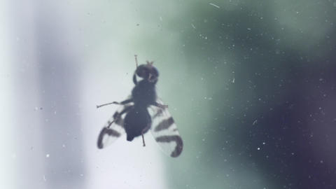 The fly crawls on the window window close-up Live Action