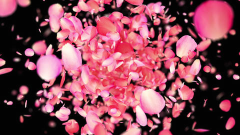 Pink Rose Petals exploding in 4K GIF