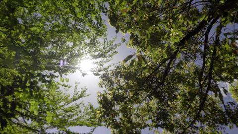Sunbeams Live Action