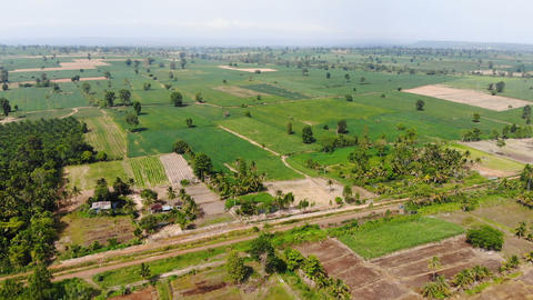 Aerial view scenic of rice field and agriculture farm Live Action