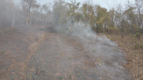 Burning fields on countryside . Farm and ecosystems crisis. Toxic haze from dry Live Action