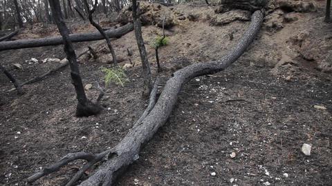 Burned forest Footage