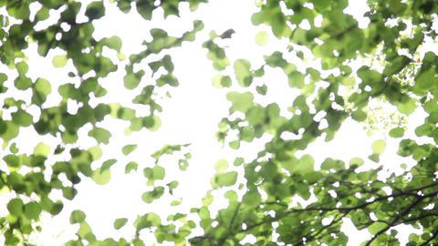 Unfocused leaves Footage