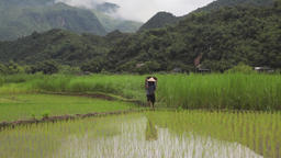 Farmer man carrying harvest basket in rice fields of Sapa Mai Chau Vietnam Footage