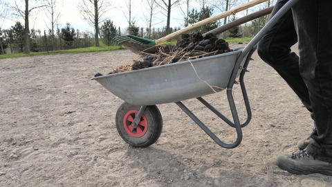 Man stuff is walking with fulfilled wheelbarrow in horse paddock. Bio farm worker is collecting bio Live Action