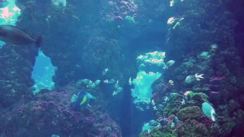 Beautiful Sharks in Aquarium Footage