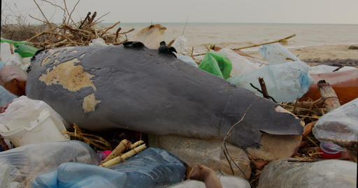 Dead dolphin. Ecological catastrophes, animals die due to poisoning of plastic Live Action
