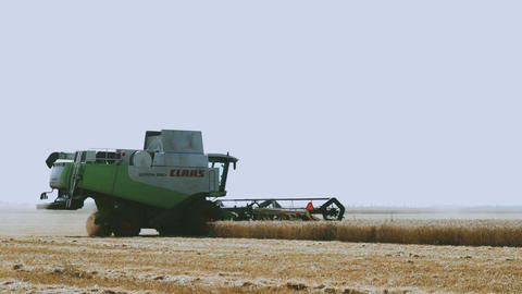 Modern combine harvester in the field. Harvesting wheat. Harvest time, hard work Live Action