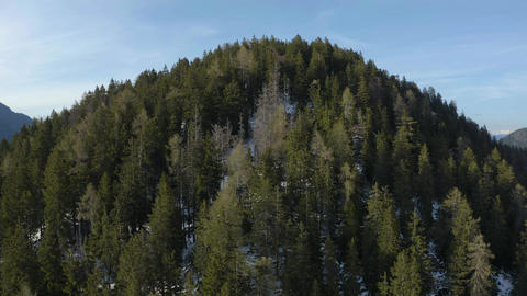 Drone flies uphill over spruce to a sunny weather, the mountains of Italy Live Action