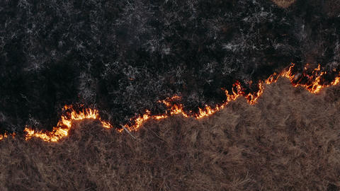 Wild fire spreads through the forest steppe. Awful big high fire near the Live Action