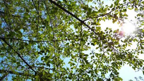 Backlit tree ライブ動画