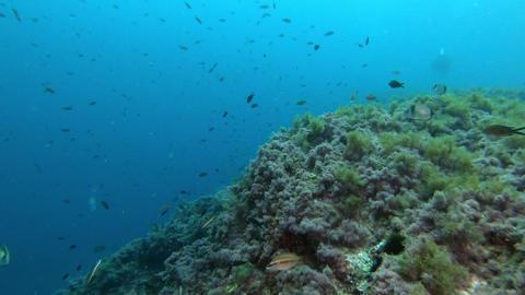 Underwater landscape Scuba dving in Majorca Spain Live Action