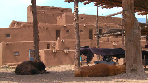 Dogs sleep outside the Taos pueblo in New Mexico Stock Video Footage