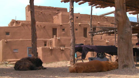 Dogs sleep outside the Taos pueblo in New Mexico Footage
