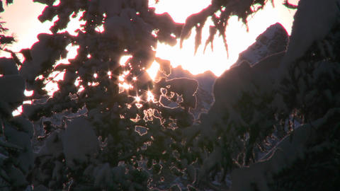 Sun shines through trees and snow in this generic Stock Video Footage