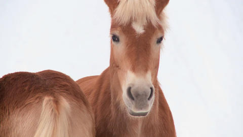 Two horses stand in the snow Stock Video Footage