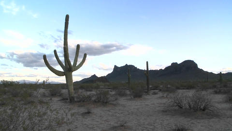 Desert brush moves by a light breeze Stock Video Footage