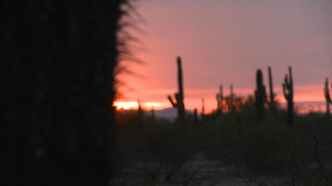 The sun sets with cactus in the foreground Footage