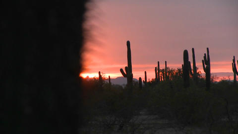 The sun sets with cactus in the foreground Stock Video Footage
