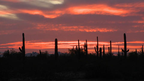 The sun is setting over a field of cactus Stock Video Footage