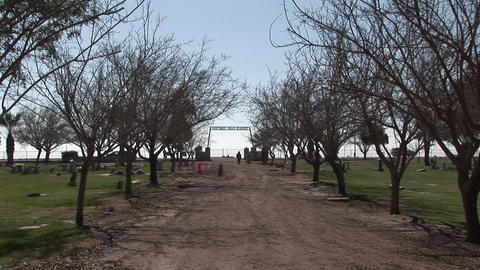 A person takes a stroll along a tree-lined dirt road of a cemetery Footage