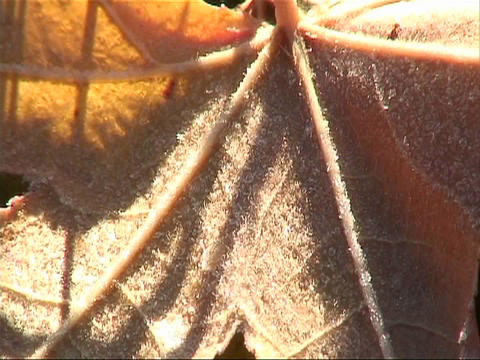 Close-up of a leaf Stock Video Footage