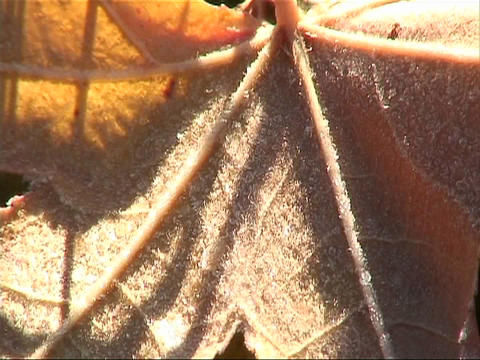 Close-up of a leaf Footage