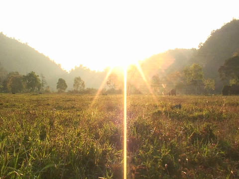 Elephants walk in an open field near sunset Stock Video Footage