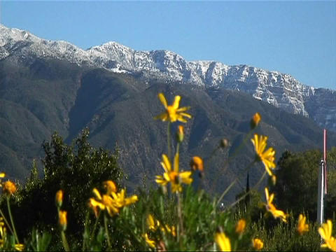 Wild flowers near a mountain sway slightly with a passing... Stock Video Footage