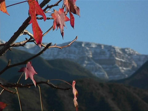 The sparse orange leaves of a tree rustle slightly in the... Stock Video Footage