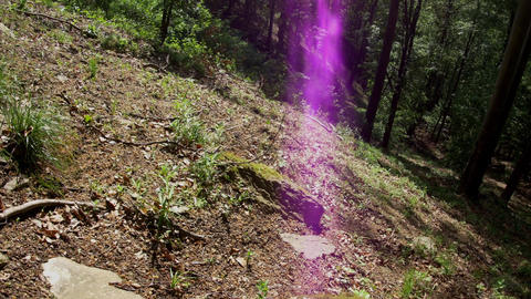 Purple glow produced by the sun in a deep beech forest on a forested mountain 61 Footage