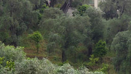 Summer rain that wet an old olive plantation on the sea coast 37a Footage
