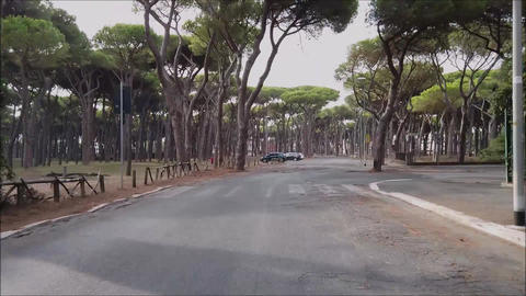 Pov of bicycle ride in hyperlapse of city street view and urban Pine forest Live Action