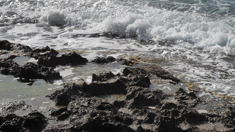 Green brown sea algae on rocky sea bank. Mossy breakwater in stormy water of sea. Beach with algae, Live Action