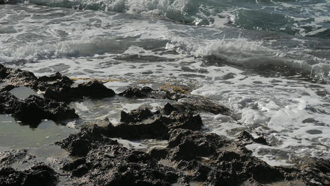 Green brown sea algae on rocky sea bank. Mossy breakwater in stormy water of sea. Island in foamy Live Action