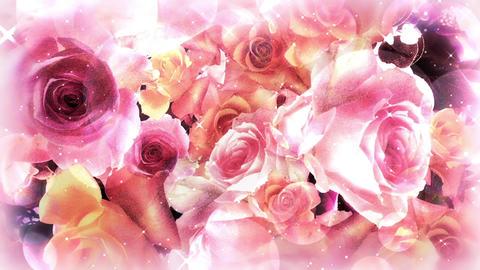 Valentine's Rose - soft pink background CG動画