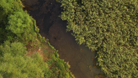 Top view of a beautiful autumn forest. Top view of a river flowing between trees Live Action