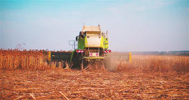 Working harvester combine sunflowers field 2k slow motion video. Farm vehicle Footage