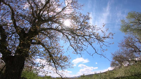view of spring nature GIF
