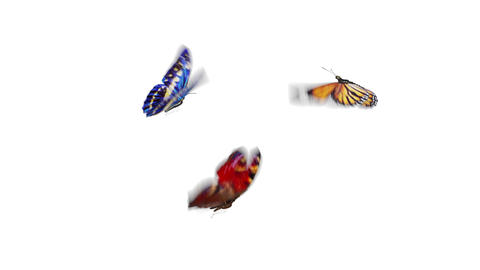 Beautiful Butterflies Different Colors Fly into the Screen, Sit Down and Fly Live Action