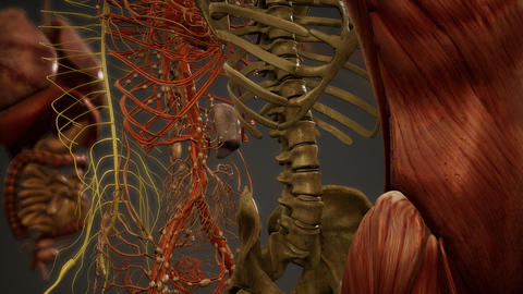 Animated 3D human anatomy illustration Live Action