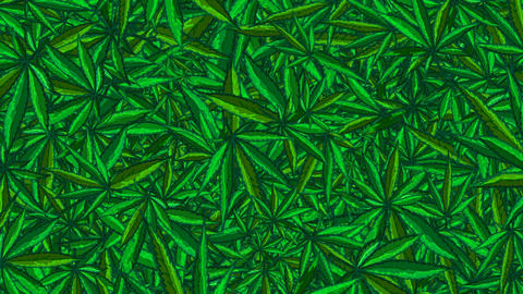 Endless Flight Through Cannabis Animation