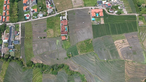 fast decline on a drone in sunny weather on rice fields in bali indonesia Live Action