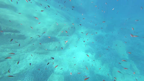 Stunning underwater footage of a big group of Chromis Chromis fish in clear, blue and deep clear Acción en vivo