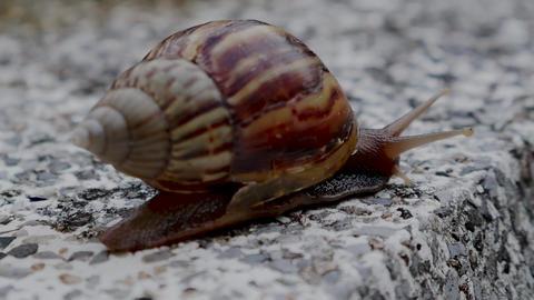 Snails crawling Live Action