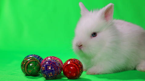 White little Easter bunny with colorful decorated eggs. Green background. Easter holiday Live Action