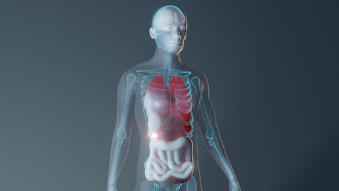 Human male internal organs representation Live Action