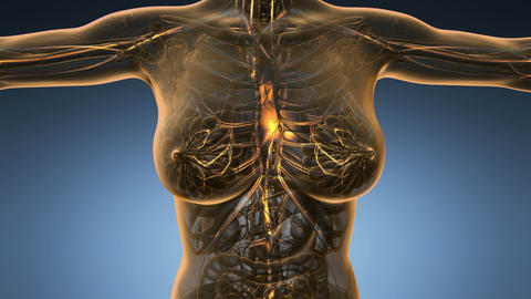loop science anatomy scan of woman blood vessels glowing with yellow Animation