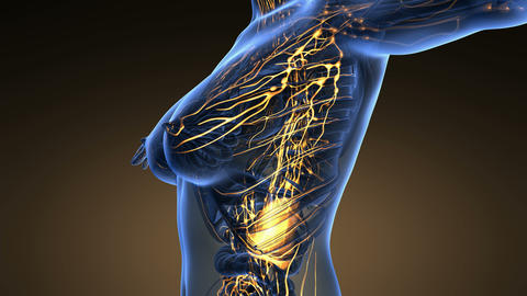 loop science anatomy scan of woman limphatic system glowing Animation