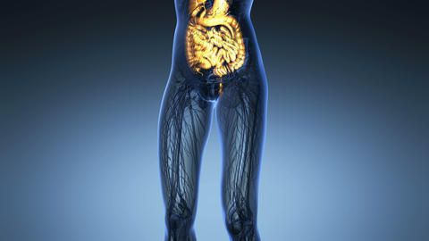 science anatomy of woman body with glow digestive system... Stock Video Footage